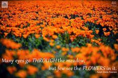 Inspirational Nature Quote - Ralph Waldo Emerson | www.MommyHiker.com