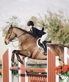 Pinterest ➳ ercequestrian Hunter Horse, Triple Crown Winners, American Pharoah, Cute Ponies, All About Horses, English Riding, Dream Barn, Hunter Jumper, Horse Photography