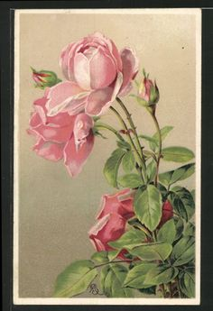 Postally used 1910 German Rose Postcard
