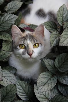 Cat Photo by Homero Gonzales Dutra -- National Geographic Your Shot