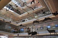 MUSE – Museo delle Scienze