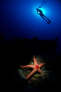 STARLIGHT - A snooted starfish and diver above in Eilat, Israel.