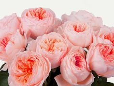 Featured Juliet roses