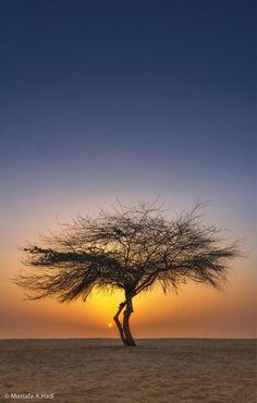 #sunset #tree