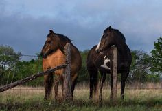 A pair of horses looking over a fence.