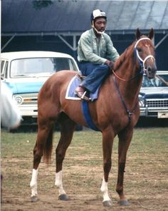 SECRETARIAT - ORIGINAL 1973 SARATOGA WORKOUT PHOTO! in Sports Mem, Cards & Fan Shop, Fan Apparel & Souvenirs, Horse Racing   eBay