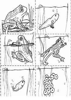 Dossier sur ELEVAGE croissance des animaux | BLOG GS CP CE1 CE2 de Monsieur Mathieu NDL