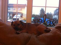Buddy relaxing!!!!