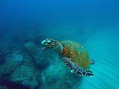 Plumbing the Depths Ocean Turtle, Sea And Ocean, Plumbing, Storytelling, Magazine, Adventure, Travel, Viajes, Magazines