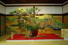りんさんの作品「大覚寺大玄関」(ID:79638)のページです。撮影機材やExif情報も掲載しています。