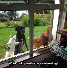 Funny Pictures of the day - What Is So Interesting (113 Pics)