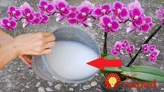 """Kvetinárka odporúča používať obyčajné veci z kuchyne, ktoré denne končia v koši– nič viac, nič menej. Obsahujú totižto všetky látky, ktoré rastlina potrebuje- fosfor, draslík, dusík, sacharidy a horčík – """"zlaté"""" látky pre zdravý životný cyklus kvetu. Tieto stopové prvky vstupujú do rastliny postupne a ak ich viete správne použiť, zabezpečia vám krásnu rastlinku na... House Plants Decor, Plant Decor, Orquideas Cymbidium, Beautiful Rose Flowers, Planting Roses, Organic Fertilizer, Growing Tree, Indoor Garden, Floral Arrangements"""