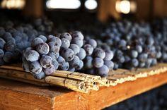 Lo Sforzato, il re dei vini valtellinesi  Scoprite la storia e il gusto dei vini della Valtellina che, fin dai tempi dei Romani, è terra di viti e vino. Provate ad attraversare la vallata: sarete sorpresi dallo straordinario sistema terrazzato con una miriade di muretti a secco in sasso che rendono possibile la coltivazione della vite nelle zone ripide e più soleggiate delle Alpi Retiche. #valtellina
