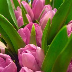 Tulips de Côte Azur