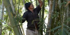 Indonésia passa o manejo florestal para as mãos indígenas: VITÓRIA!