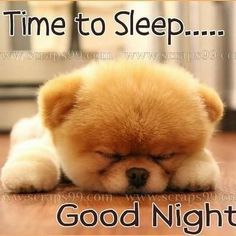 Good Night Greetings, Good Night Messages, Good Night Wishes, Good Night Quotes, Baby Puppies, Cute Puppies, Cute Dogs, Funny Dogs, Cute Good Night