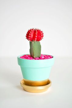 CACTUS, LAS ULTIMA TENDENCIA EN DECORACIÓN. APRENDE A DECORAR MACETAS!
