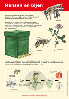 Science For Kids, Science Nature, Outdoor Learning, All Nature, Animal House, Fauna, Coops, Bee Keeping, Agriculture