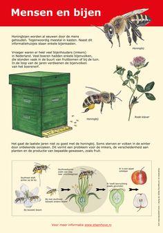 Bijenpaneel gemaakt in opdracht van de Gemeente Amstelveen #honingbij Outdoor Learning, Nature Journal, All Nature, Fauna, Science For Kids, Bee Keeping, Agriculture, Diy For Kids, Beautiful Gardens