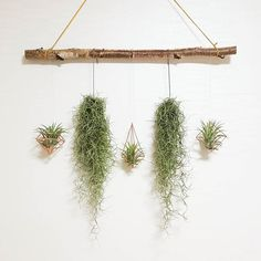 50 Awesome DIY Hanging Plants Ideas For Modern Backyard Garden - Wedding Hang Plants From Ceiling, House Plants Hanging, Hanging Plants Outdoor, House Plants Decor, Plant Decor, Indoor Plants, Ceiling Hanging, Diy Hanging, Window Hanging