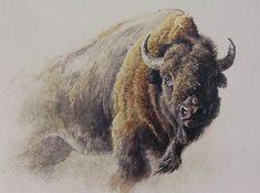 Robert Bateman Bison Study