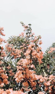 flower aesthetic x Peach Aesthetic, Nature Aesthetic, Flower Aesthetic, Spring Aesthetic, Aesthetic Collage, Aesthetic Gif, Aesthetic Backgrounds, Aesthetic Iphone Wallpaper, Aesthetic Wallpapers