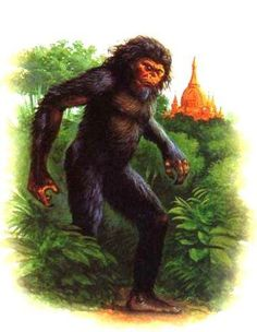 The Asian Wildman-typically described as human-like bipedal animals, between five and six and a half feet tall, their bodies covered with reddish-brown hair, with anthropomorphic facial features including a pronounced brow ridge, flat nose, and a weak chin. Many cryptozoologists believe there is a similarity between these descriptions and Neanderthals.