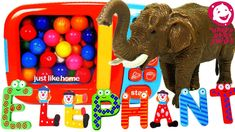 Learn Colors and Letters for Children with Animal Toy for Kids and Quiz for Preschoolers Learning Colors For Kids, Colors For Toddlers, Toddler Learning, Preschool Learning, Fun Learning, Elephants For Kids, Slime For Kids, Letters For Kids, Baby Smiles