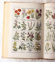 ... herbs