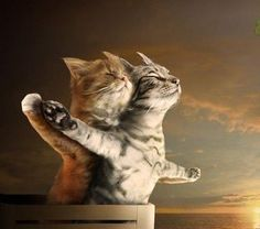 Titanic version minou ... cha sent l'poisson, non ?