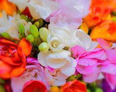 Rose, Plant, Pink, Roses