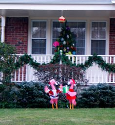 Project 365 - Each day a new adventure: Day 251: Flamingoes in the Christmas spirit!
