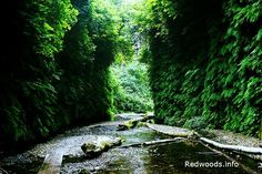 Fern Canyon in Redwood National & State Parks. The canyon is still open and is as green and lush as ever. You'll probably also catch some wild Roosevelt Elk there too.