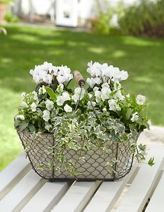 Explore the range of Outdoor plants at M&S. Choose from the wide collection of hanging, patio & boots campanula plants. Rusty Garden, Garden Junk, Garden Pots, Garden Crafts, Garden Projects, Outdoor Projects, Balcony Plants, Outdoor Plants, Basket Flower Arrangements