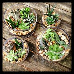 84 Best Designs By Southeast Succulents Images On Pinterest
