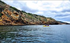 Channel Islands Adventure Co. (@islandkayaking) • Instagram photos and videos Channel Islands National Park, California Destinations, Snorkeling, Kayaking, National Parks, Wildlife, Hiking, The Incredibles, Explore