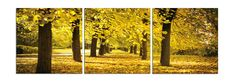 Don't you want to gather them all together, pile them up, and jump in? We do! $220 Available in 3 sizes. Elementem Photography, triptych, home decor, photo prints on wood, fall, autumn, yellow, gold, golden, forest, tree, trees, leaf, leaves