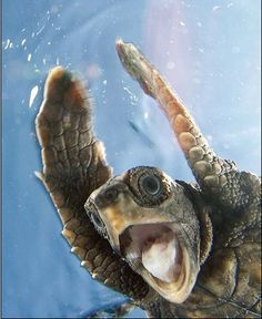 That is one happy turtle!!