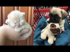 Cute baby animals Videos Compilation cute moment of the animals Soo Cute! Cute Baby Bunnies, Cute Baby Animals, Funny Animals, Cute Babies, Baby Animal Videos, Funny Animal Videos, Rabbit Gif, Bunny Rabbit, Animals Of The World