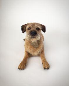 Needle felted Border Terrier, dog sculpture Border Terrier, Dog Sculpture, Animal Sculptures, Needle Felted Animals, Felt Animals, Pet 1, Dog Cat, Puppy Day, Felt Pictures