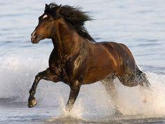 cavallo in acqua wallpaper