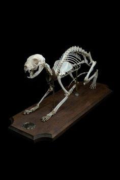 skeletal mount