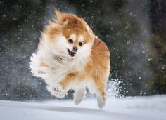 Snow Dog by Greg Forcey