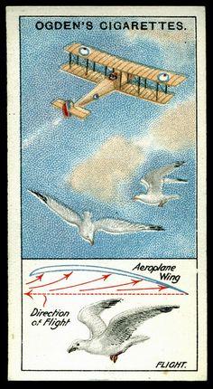 Cigarette Card - Flight by cigcardpix, via Flickr