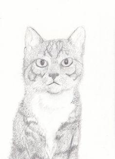 Sketch of tabby cat kitten print 4 x 6 by cat2owl on Etsy, $5.00
