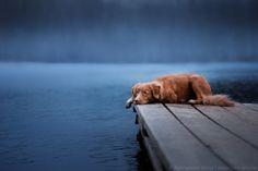 На озере. Author: Анна Аверьянова