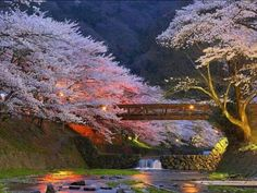 Beautiful Cherry Trees in Kyoto, Japan! Natural beauty ♥ want to explore japan some day Places To Travel, Places To See, Travel Destinations, Places Around The World, Around The Worlds, Parcs, Japan Travel, Belle Photo, Beautiful Landscapes