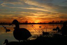 Duck hunting sunrise