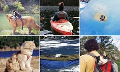 Cats of Instagram who prefer outdoor adventures like KAYAKING to sitting at home | Daily Mail Online