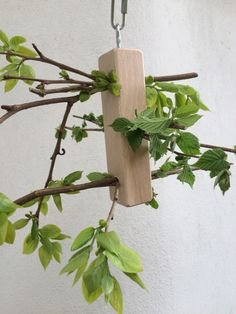 Fresh branches